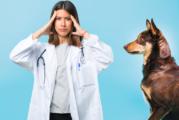 CEVE-EMVETIB encuentra grandes deficiencias en el proyecto de Ordenanza de bienestar animal del Ayuntamiento de Palma