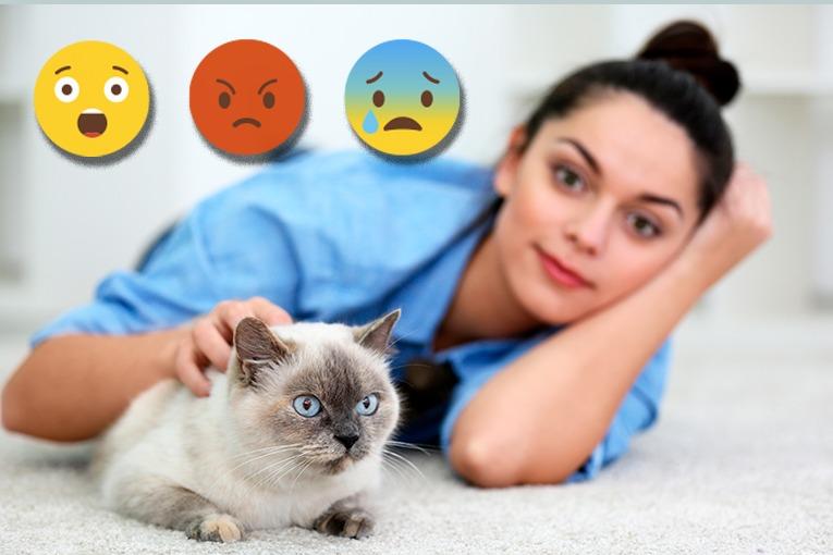 Informe CEVE 2018 sobre la situación socioeconómica y laboral del sector de los centros sanitarios veterinarios.